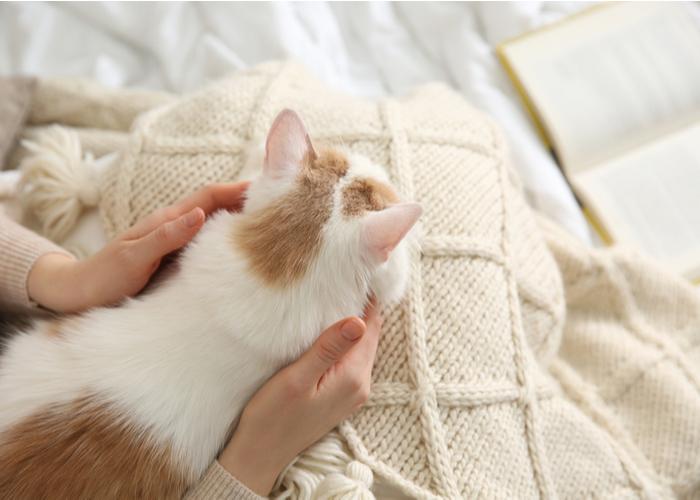 cat owner