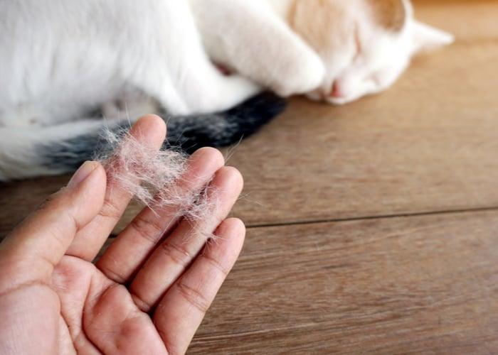 cat owner hairball