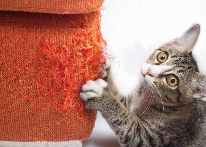 cat behavior