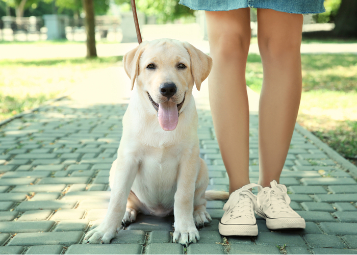 Stick to shady areas to protect dog paws