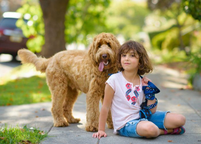 Goldendoodles are ideal babysitters and service dogs.