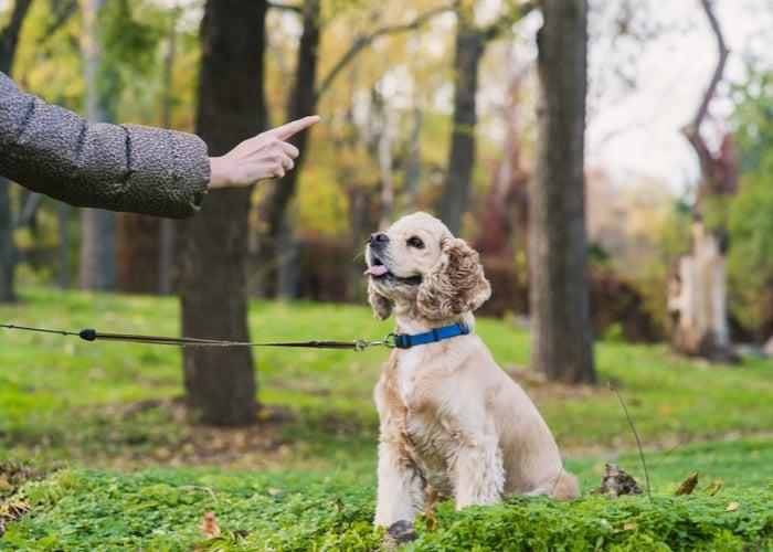 Establishing the dog-master relationship