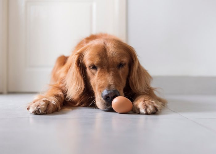 Potential Side Effects of Eggs for Dogs