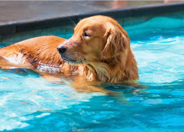 Dog cooling off during summer